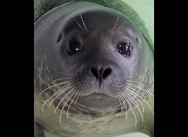 Facebook - Marine Mammal Stranding Center