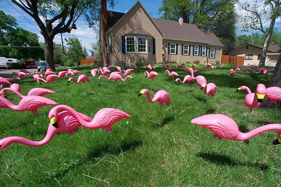 Ventnor Community Comes Together to Put Flamingos on Neighbors Lawn